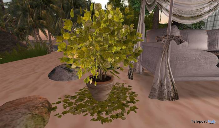 Potted Plant with Leafs on Ground by CJ Creations - Teleport Hub - teleporthub.com