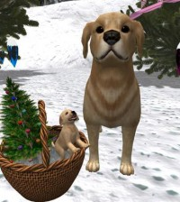 Basket with Cute Dogs by CJ Creations - Teleport Hub - teleporthub.com