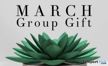 Potted Succulent Group Gift by Fancy Decor - Teleport Hub - teleporthub.com