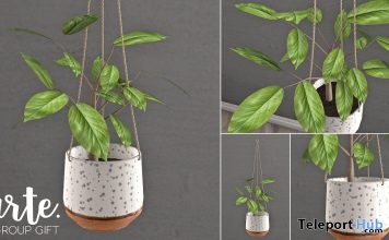 Hanging Planter July 2018 Group Gift by tarte