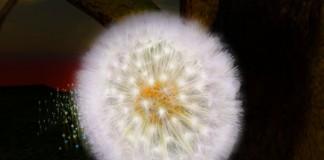 Gorgeous Dandelion Flower - Teleport Hub - teleporthub.com