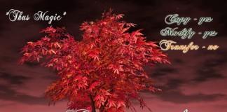 Japanese Maple Tree Red by Thus Magic - Teleport Hub - teleporthub.com