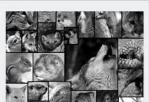 Animalistic Hunt - Teleport Hub - teleporthub.com