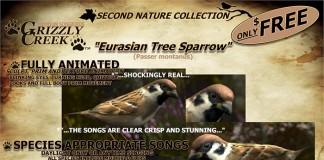 Songbird Eurasian Tree Sparrow by Grizzly Creek Digital Arts - Teleport Hub - teleporthub.com