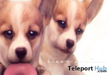 My Cutie Corgi 2 Set ACCESS Event June 2018 Gift by Black Bantam - Teleport Hub - teleporthub.com