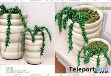 Fog Succulent Plant October 2019 Group Gift by Ariskea - Teleport Hub - teleporthub.com