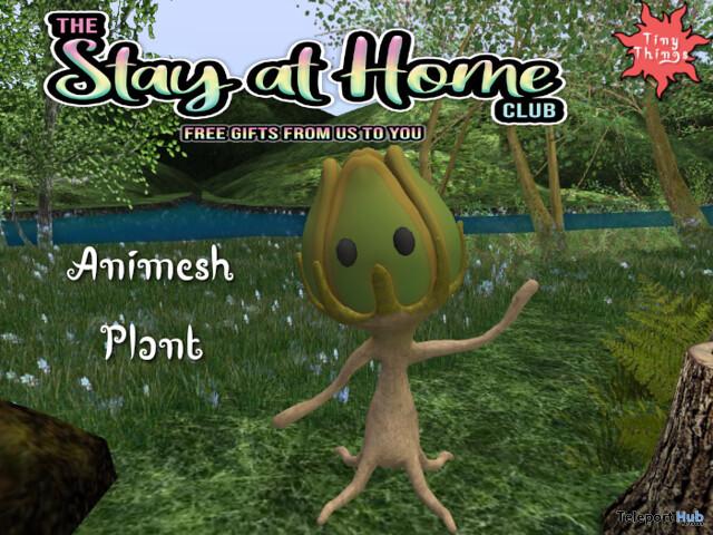 Animesh Plant April 2020 Gift by Tiny Things Store - Teleport Hub - teleporthub.com