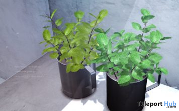 Mint Leaf Pot May 2020 Group Gift by Dope+Mercy - Teleport Hub - teleporthub.com