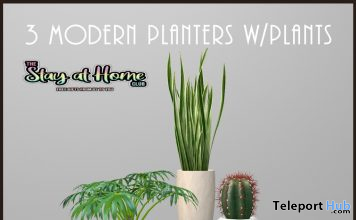 Three Modern Planters With Plants August 2020 Gift by Demimonde - Teleport Hub - teleporthub.com