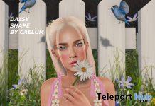 Daisy Shape for Legacy and Lelutka 10L Promo by Caelum - Teleport Hub - teleporthub.com