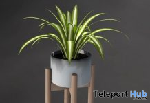 Spider Plant In Stand April 2021 Group Gift by XED DESIGN - Teleport Hub - teleporthub.com